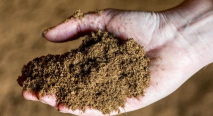 Beneficial microbes in peat